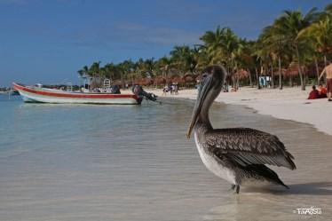 Akumal, Riviera Maya, Mexico