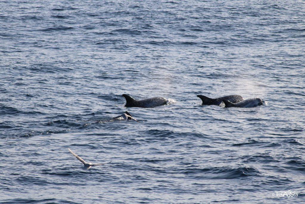 Whale Watching, Vesterålen, Norway