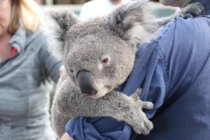 travailler comme guide touristique en australie