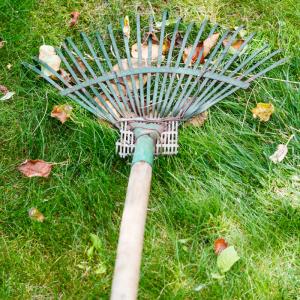 entretien pelouse scarification
