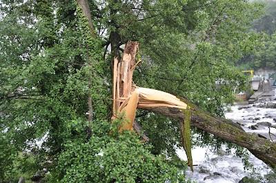 nettoyage de rivière, élagage, Lourdes