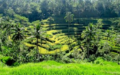 Tipy: 10 nejčastějších chyb při první návštěvě Bali
