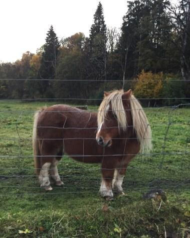 Tiny horsie in Dufftown