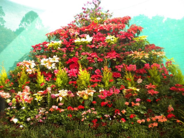 Lalbagh Flower Show in Bangalore