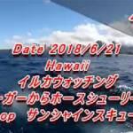 【海外旅行】ハワイ イルカウォッチング 2018/6/21