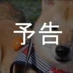 柴犬シバチャと行く「伊豆旅行記」スタート!