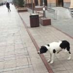 海外の野良犬が人懐っこすぎる【アルメニア一人旅】