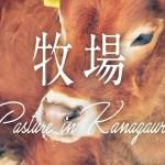 [一人旅] 牧場で動物と遊んだりバター作ったり [料理・乗馬・うさぎ]