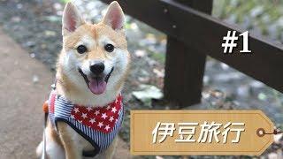 柴犬シバチャと行く「伊豆旅行記」#1 「愛犬の駅」