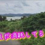 【ひとり旅】【感動】まだ東京で消耗してるの?小浜島の自転車ドライブは最高すぎ・・