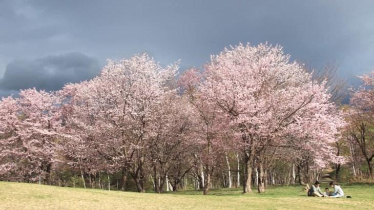 【旅エイター】桜前線『真駒内公園』 北海道札幌市