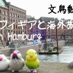文鳥動画 文鳥フィギア達と海外旅行 (Train journy from Amsterdan to Hamburg with java sparrows)