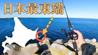 【北海道釣り旅】日本最東端の漁港で釣りしたら魚影がヤバかった件【納沙布岬】#4