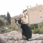 Mediterranean Cat,Day 14-Majorca(3) / 地中海 猫旅 14日目-マヨルカ島(3)