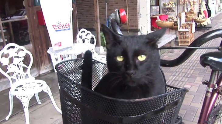 Day 5 of West Japan Cat Trip,Sakaiminato(2)/ 西日本猫旅5日目,境港(2)