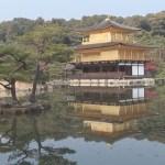 Japan Cat Trip, Kyoto-Day 1 / 日本猫旅,京都-1日目