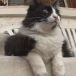 Mediterranean Cat trip,Day 29-Nice~Venice(3) / 地中海 猫旅 29日目-ニース~ヴェネツィア(3)