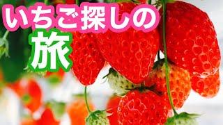 苺探しの旅とお買い物ブログ