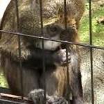 60 旭山動物園旅行記(約60分動画)