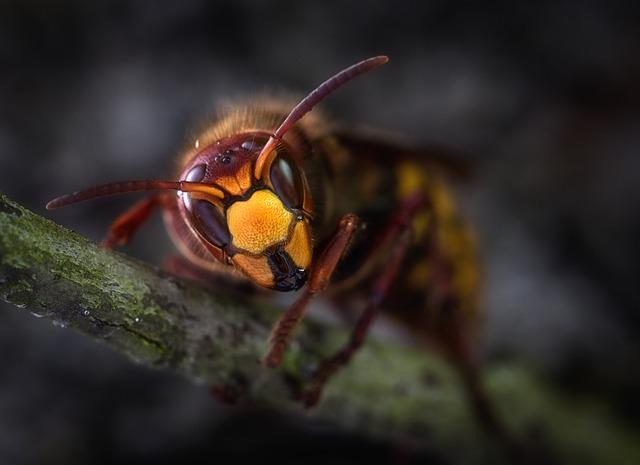 トックリバチ 巣の大きさ 種類 危険性 幼虫