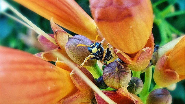 アシナガバチ 天敵 種類 越冬 益虫 毒性