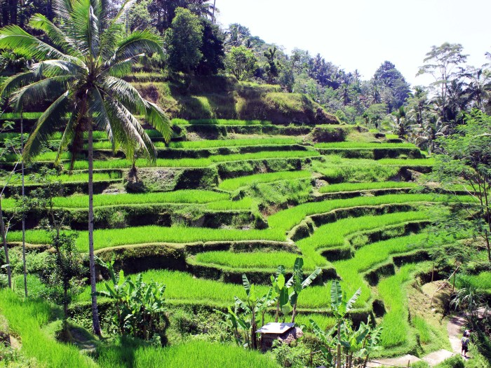 Tegalalang Rice Terraces  - Ubud, Bali, Indonesia