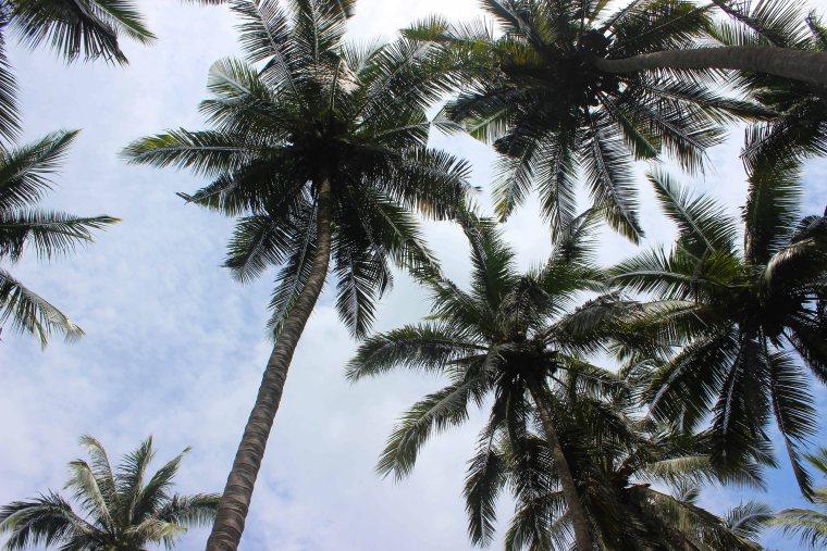 Traveling to Nusa Penida, Bali - Travel Lush