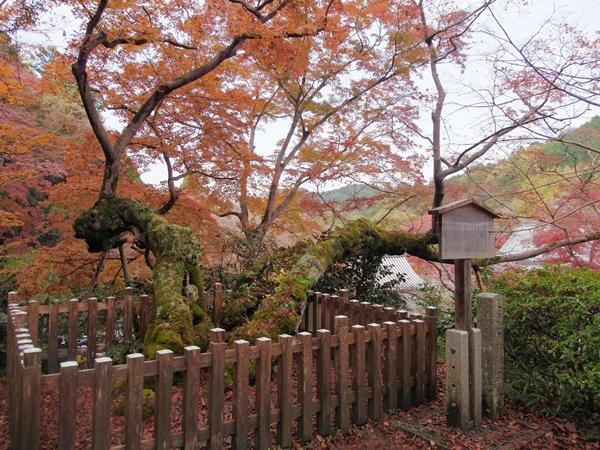 延命寺の夕照の楓