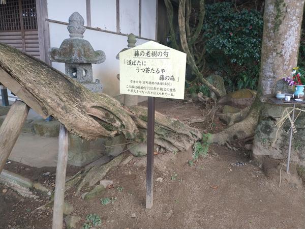 腰神神社の藤の木