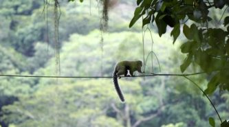 A marmoset on a wire