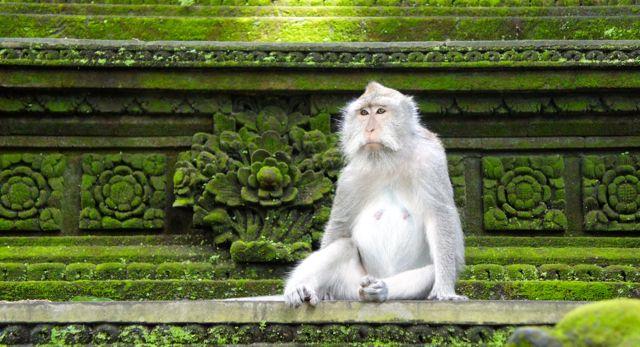 Sacred Monkey Temple