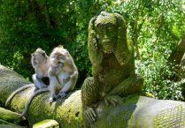 Sacred monkeys