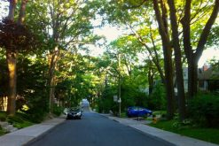Lovely tree lined streets