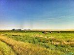 A typical prairie scene