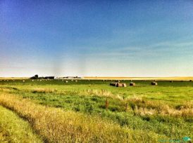 A typical prairie scene