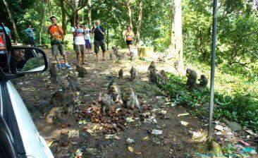 Tourists and monkeys
