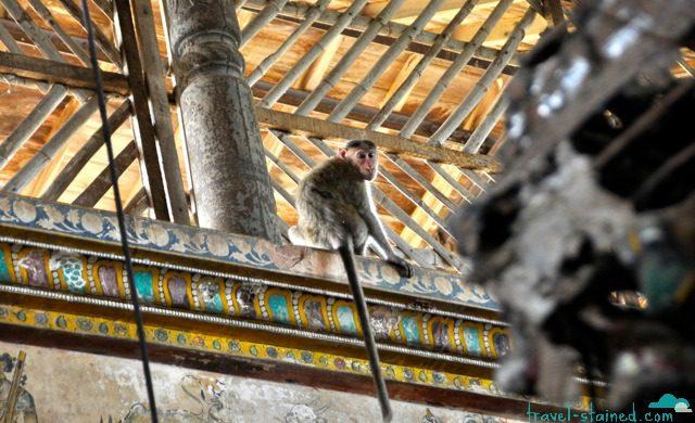 Observing monkeys