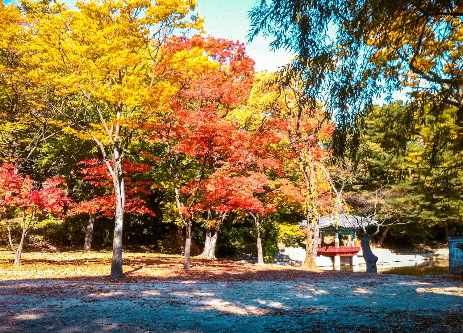 changdeokgung palace in autumn