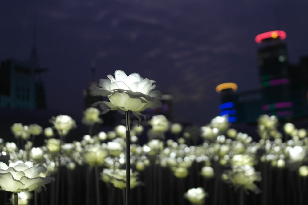 DDP LED Rose Garden - Seoul at night