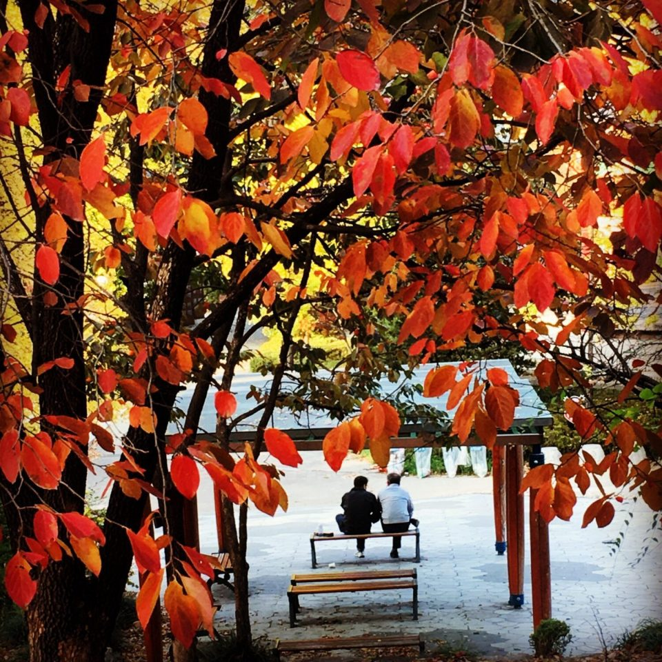 autumn in seoul children's grand park