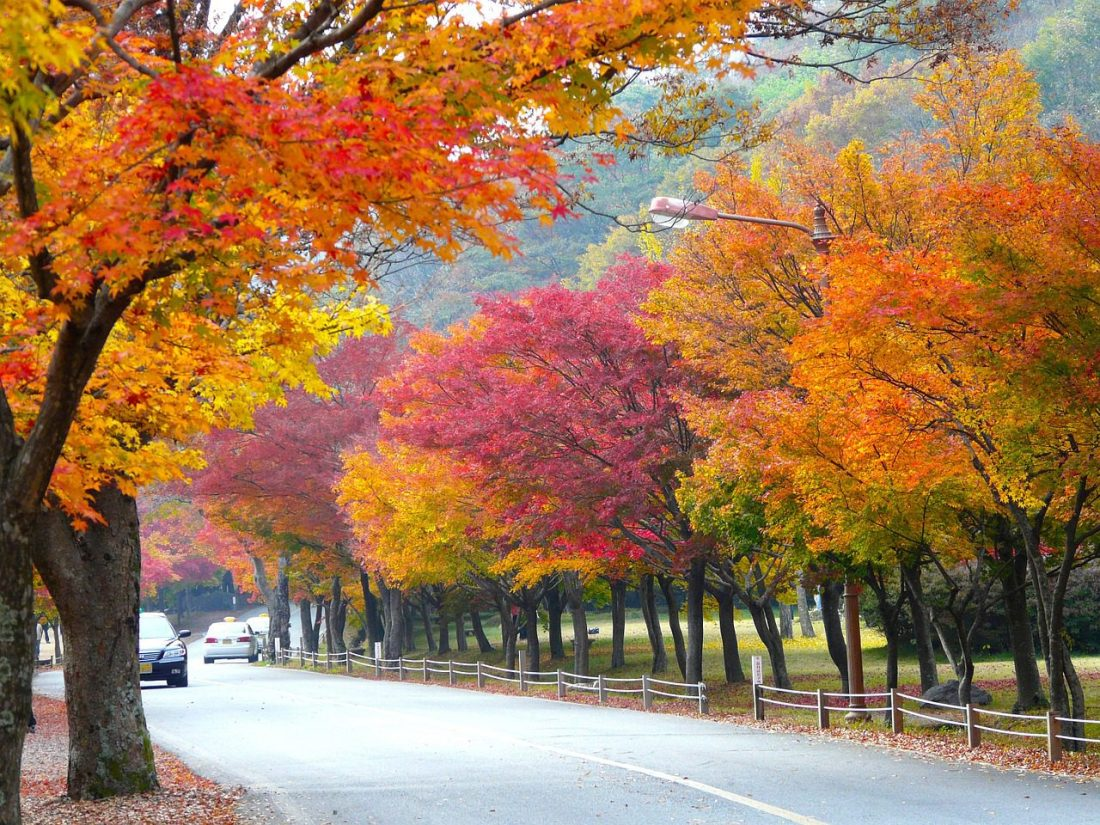 trees lining a road during autumn in seoul