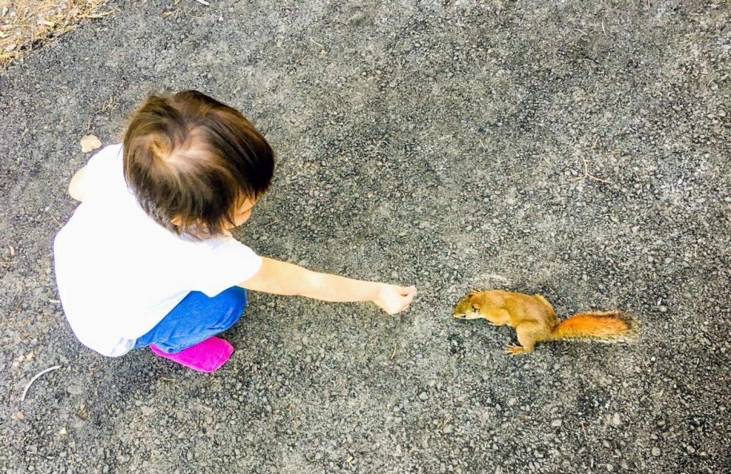 little girl meeting a chipmunk
