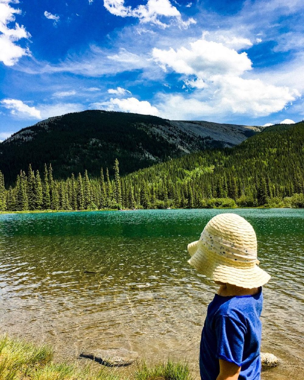 forget me not pond alberta