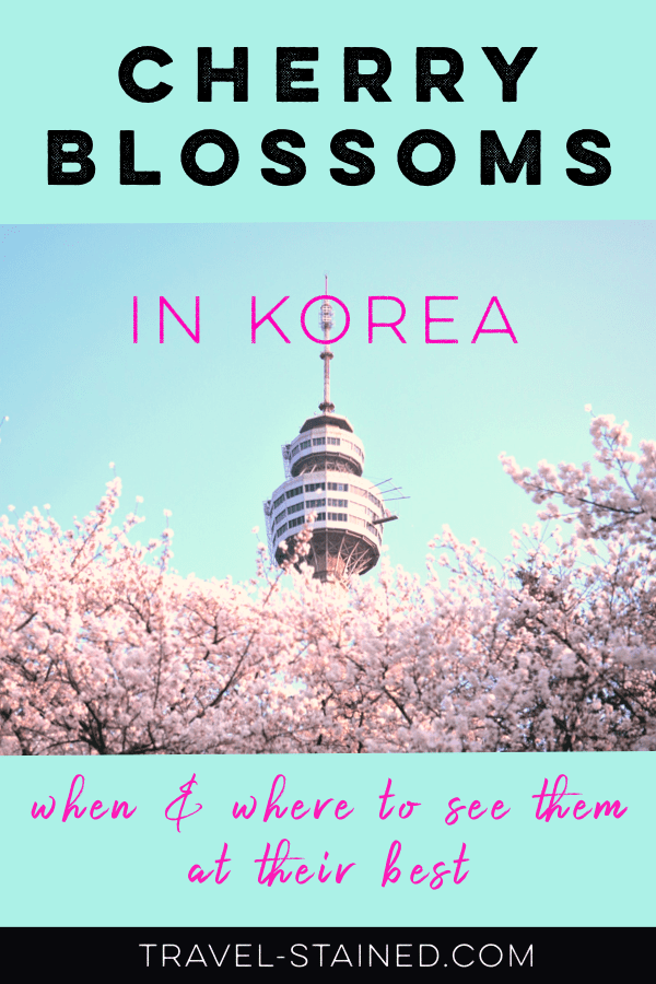 Cherry blossoms in Korea   Where + when to see them at their best.