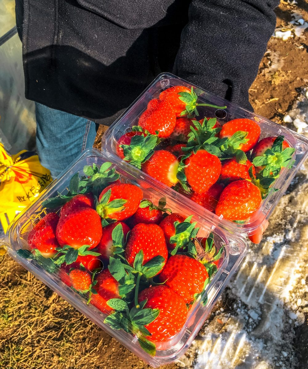strawberries in korea