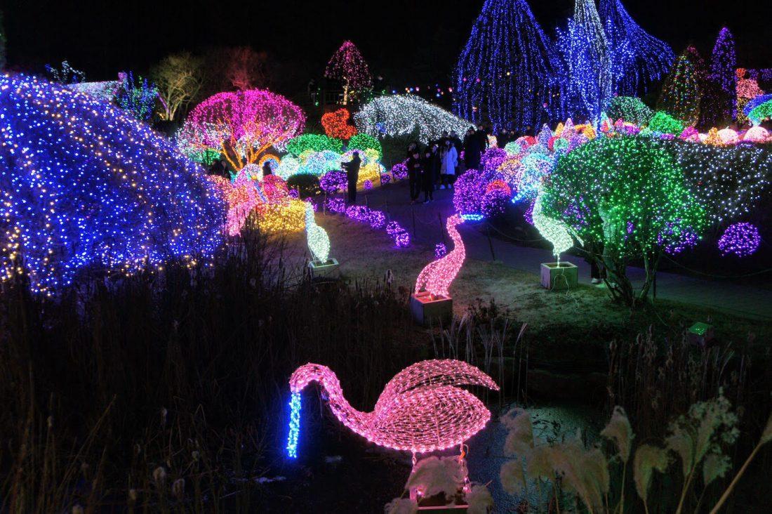 lighting festival at garden of morning calm in winter