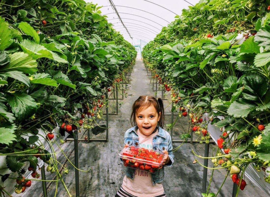 girl in strawberry greenhouse in korea