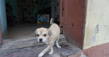 トリニダの犬