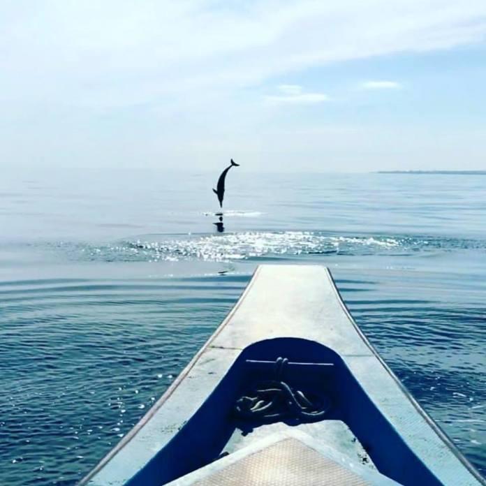 dolphin watching off the shore of Lovina Beach