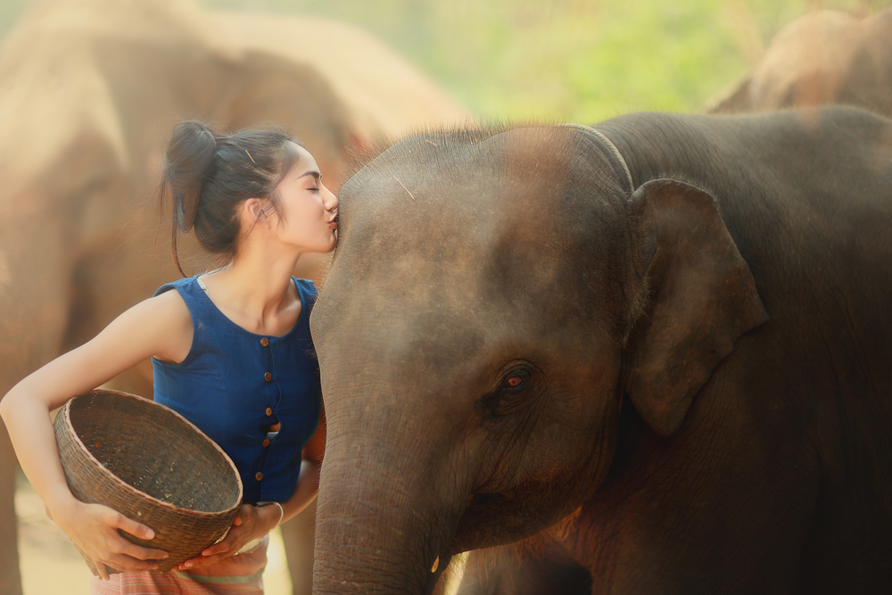Chiang Mai, elephant care, sustainable tourism